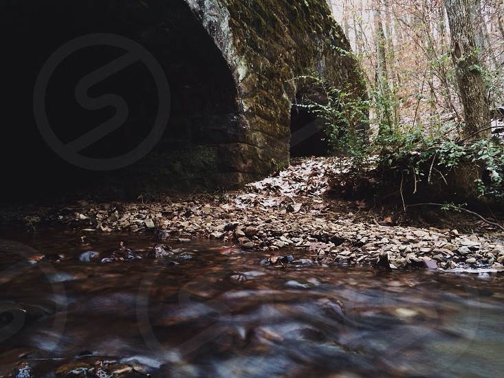 forest river photo