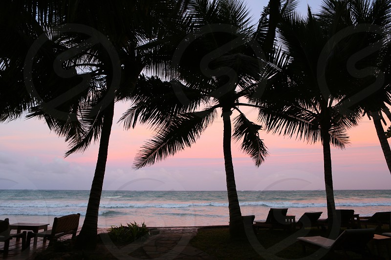 Sunset palms beach wave rest sky nature colorful  trip ocean sea  photo