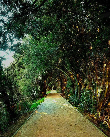 Stunning riverside walkway with natural light shining through the trees. A real picturesque place to be feeling like your being enveloped by nature. photo