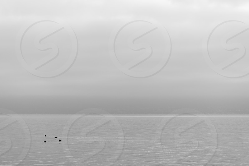 Beautiful tranquil background black and white tone of misty and cloudy lake Geneva Lausanne Switzerland with four swan or birds swim on the lake photo