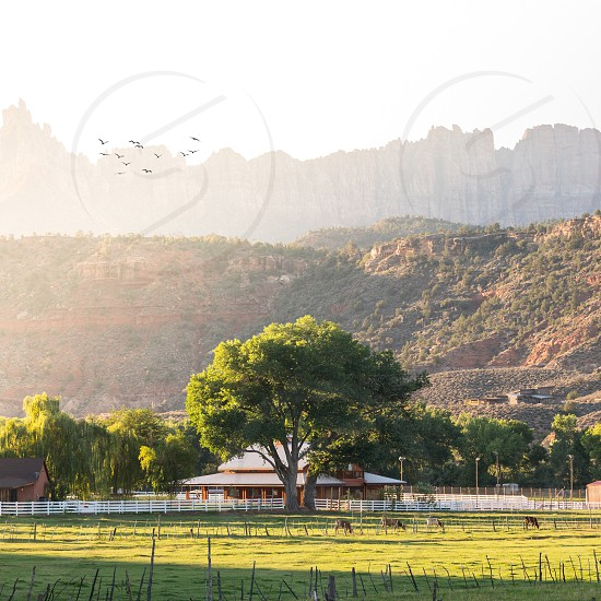 flock of birds on flight over the ranch at the valley photo