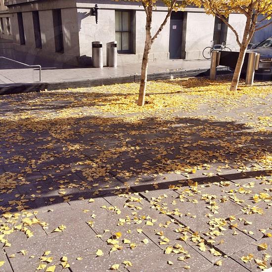 yellow leaves photo