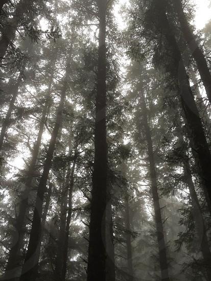 Hazy forest trees nature photo