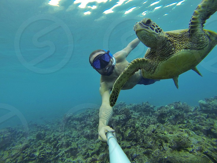 Turtle sea sea turtle ocean Hawaii tropical relaxing gopro swimming snorkel scuba scuba dive amazing cool incredible original reef photo