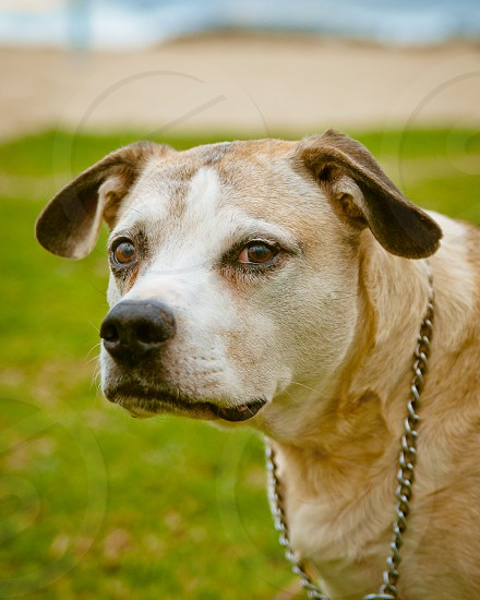 """Zeko"" Dogtown USA photo"
