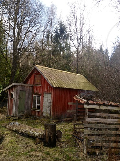 red small cabin in the woods photo