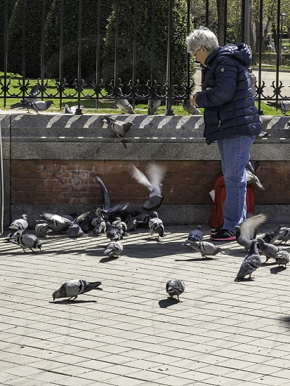 old woman in the park eating pigeons photo