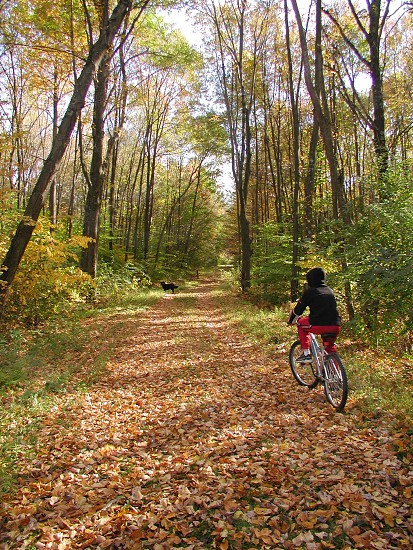 A boy bikes in the woods with his dog. photo