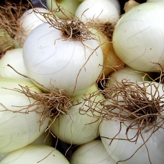 White onions with roots photo
