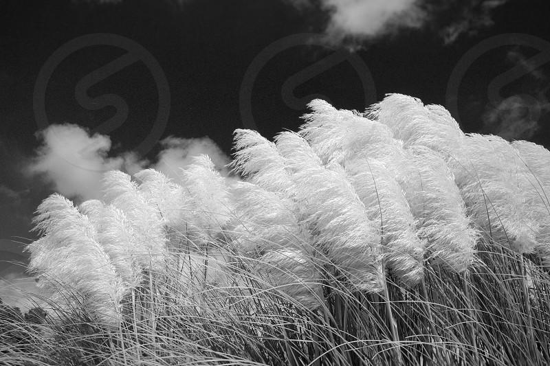 Nature landscape plants wind monochrome beauty photo
