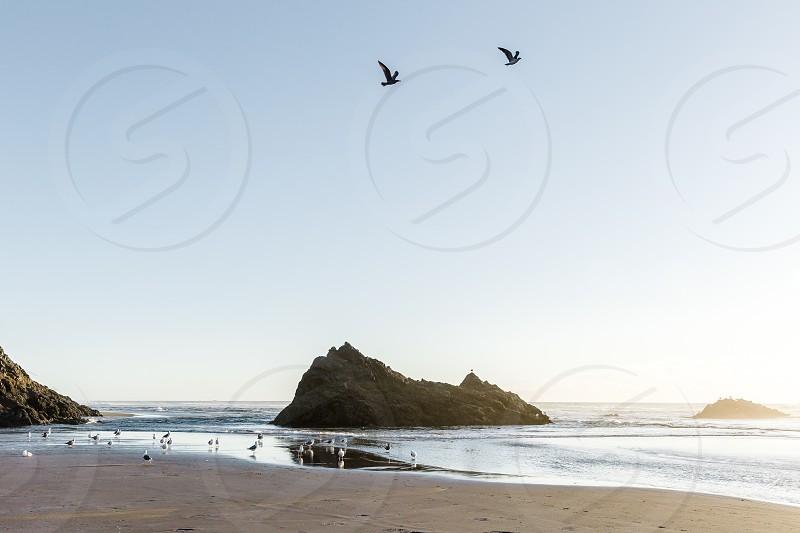 seagulls flying over a beach area photo