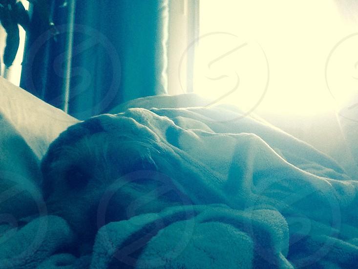 tan dog photo