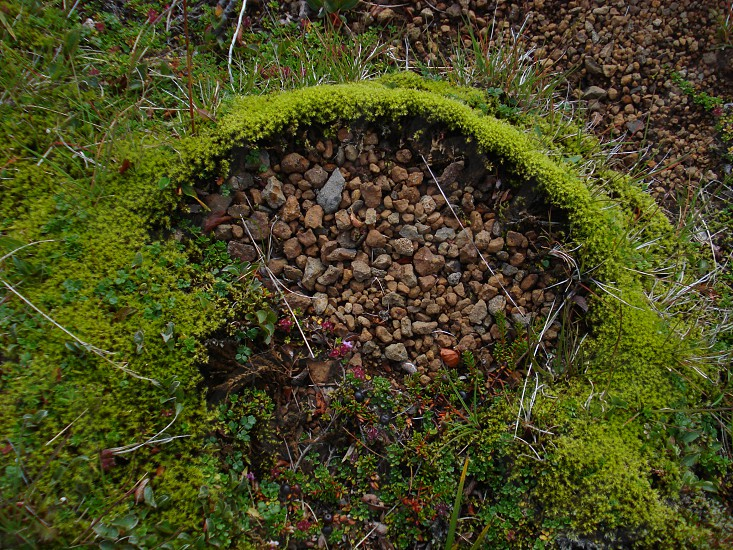 Moss and pebbles. Iceland nature. photo