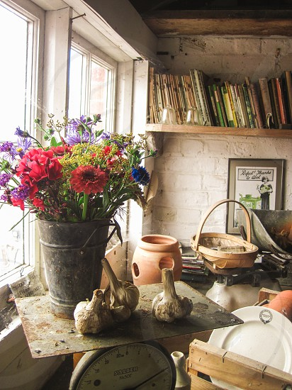 Vintage shed with terracotta plant pots and a metal bucket of flowers. photo