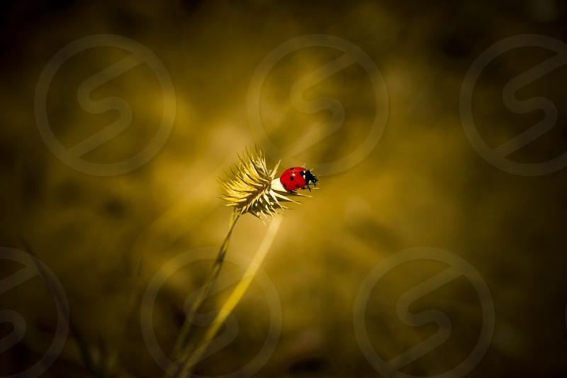 ladybug macro photography photo