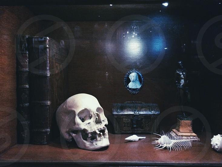 human skull photo
