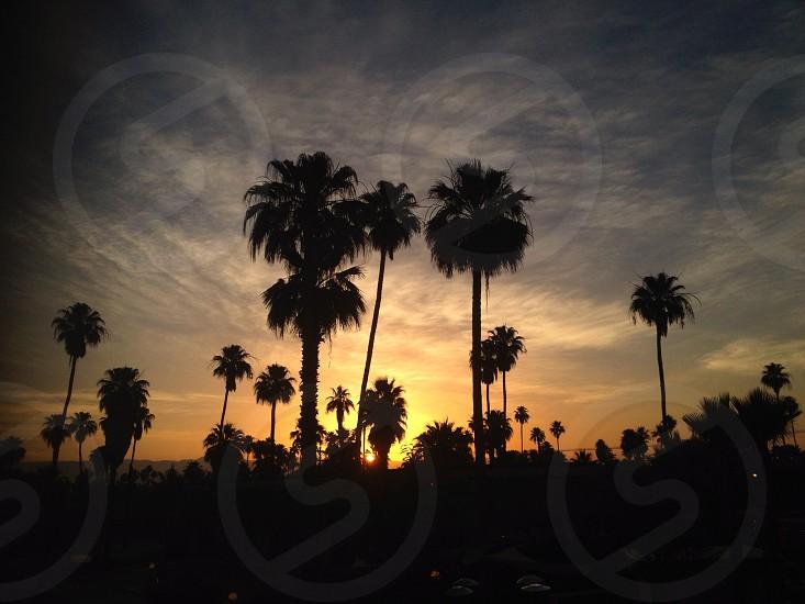 green fan palm tree photo