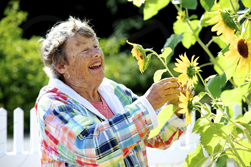 woman smiling at sunflower photo