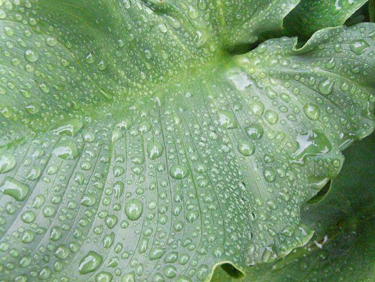 plant leave moisture photo