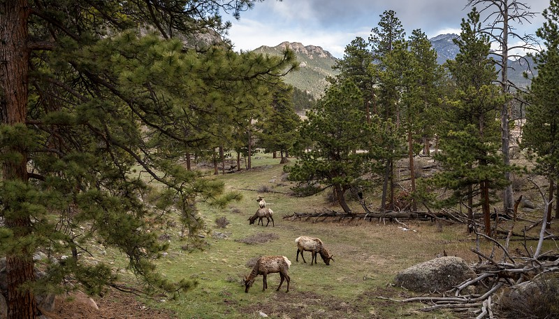Impressions around the Sprague Lake in the Rocky Mountains Nationalpark photo