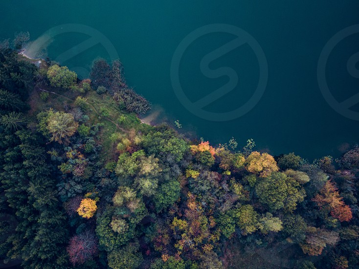 Aerial view of autumn coloured forest at lake shore photo