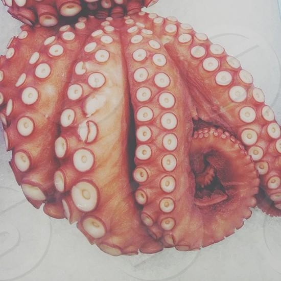 Seafood! photo