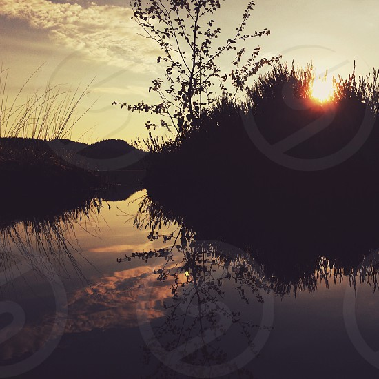 sunrise over reeds and tree in water photo
