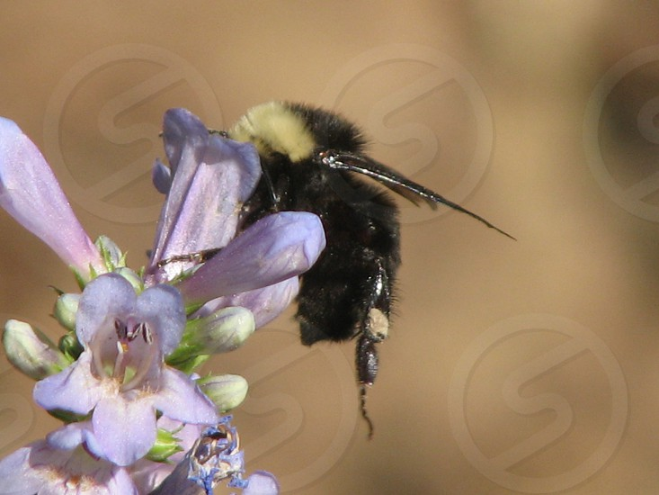 beige and black bumble bee photo