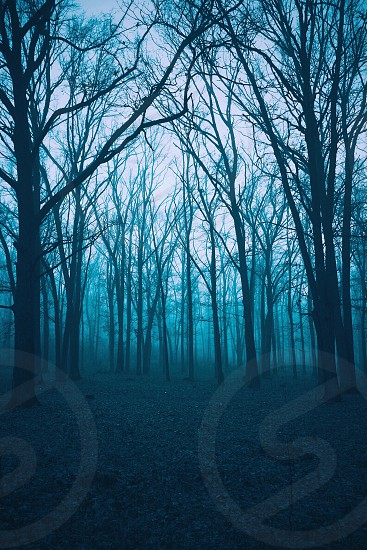 leafless misty forest trees photo