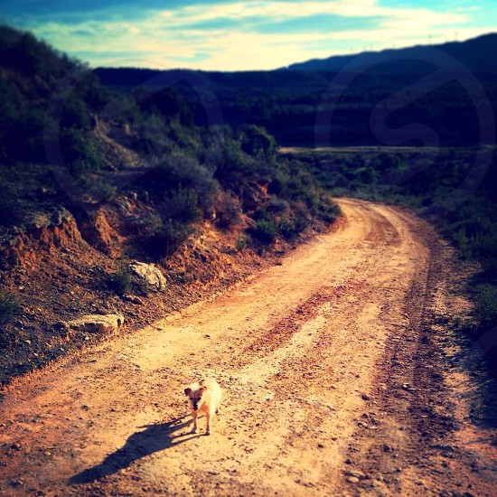 Brave dog on a country road Spain  photo