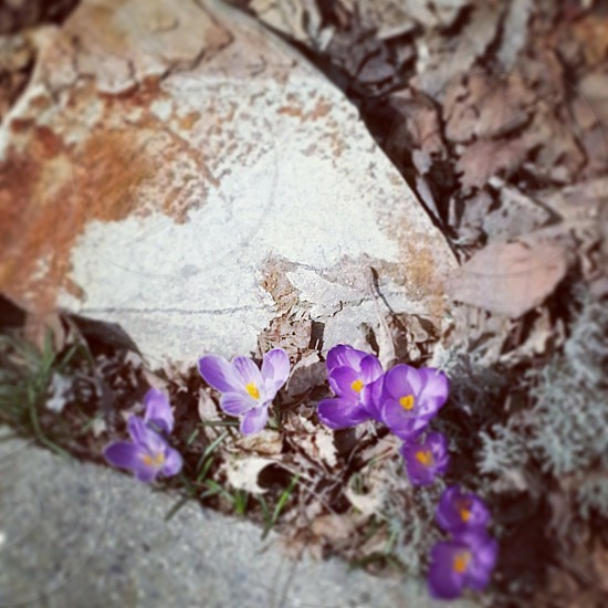 flowers in bloom photo