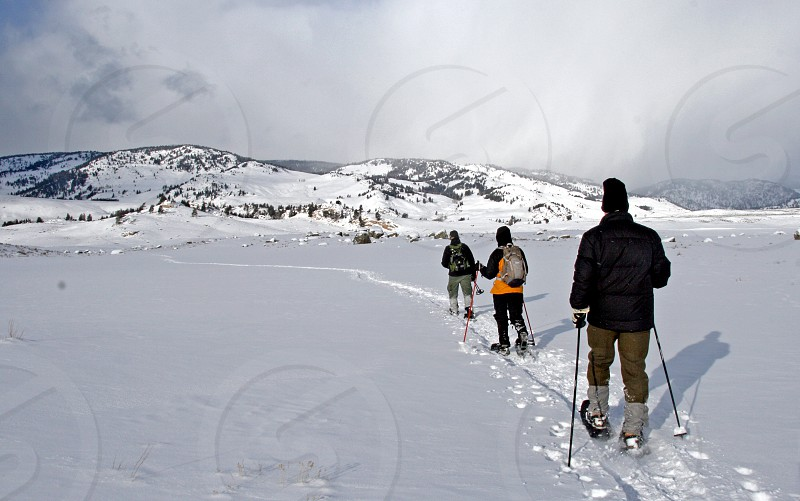 Snowshoers in Yellowstone National Park photo