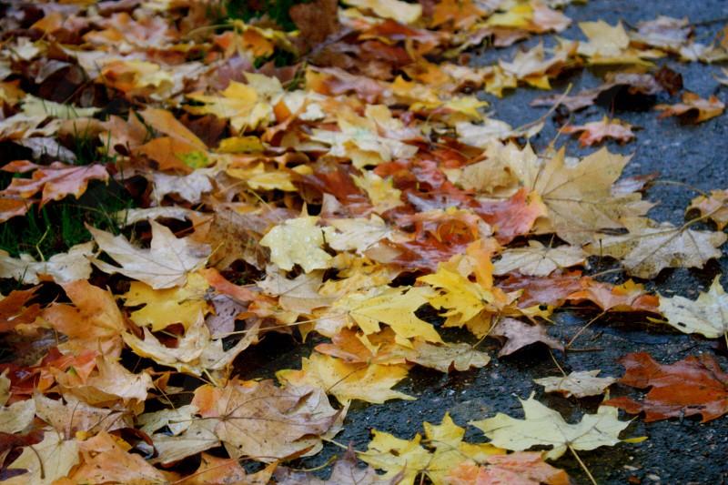 Leaves fall autumn autumn leaves fall color yellow orange missouri  photo