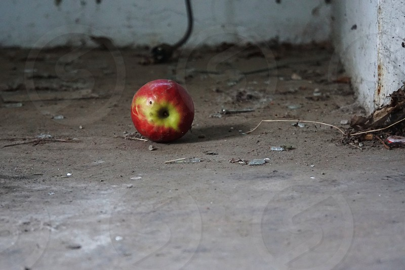 Found this appel on the floor in an abandoned house in Belgium. In the city of Zoersel. photo
