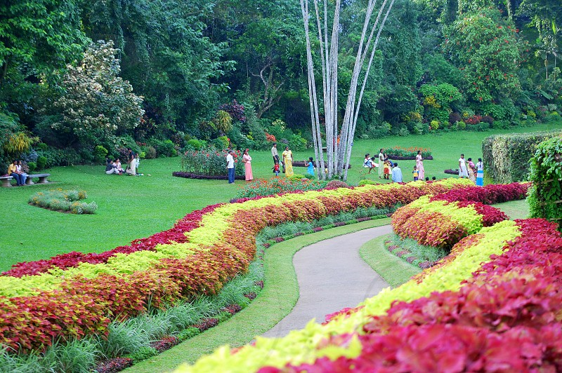 people on park with green pastures and multi colored bushes surrounded by green trees during daytime photo