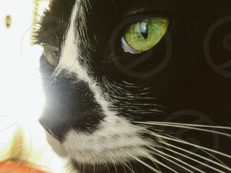 Gizmo the cat photo