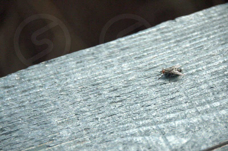 Fly on Table photo