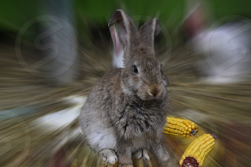 The Rabbit effect photo