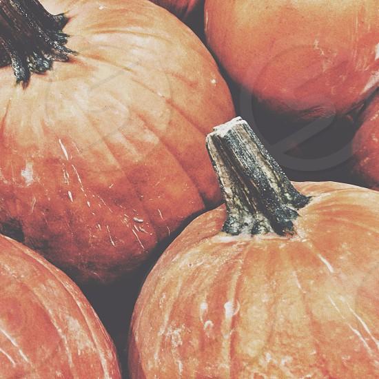 pumpkin vegetable photo