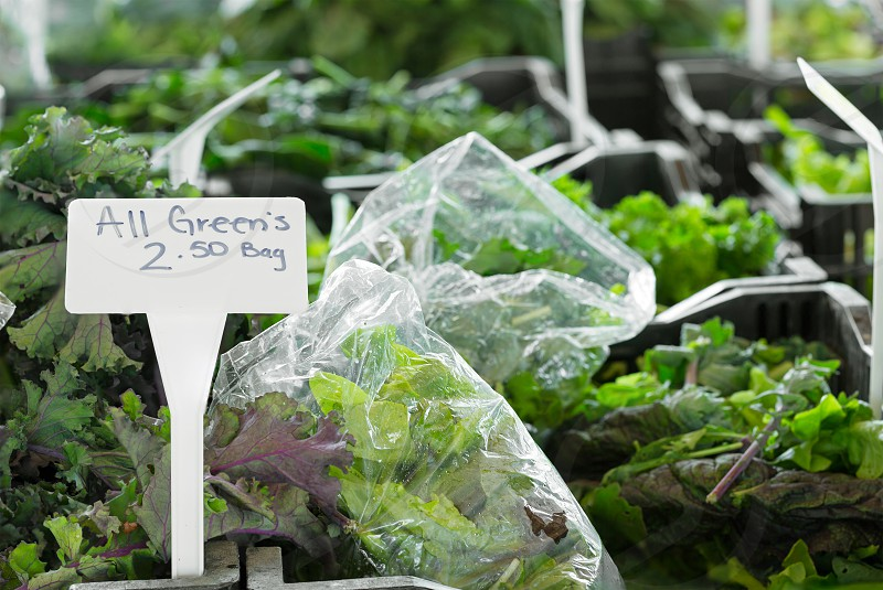 Variety of leafy greens in plastic bags at an outdoor farmers market photo