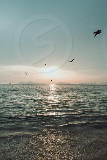 the seagulls photo