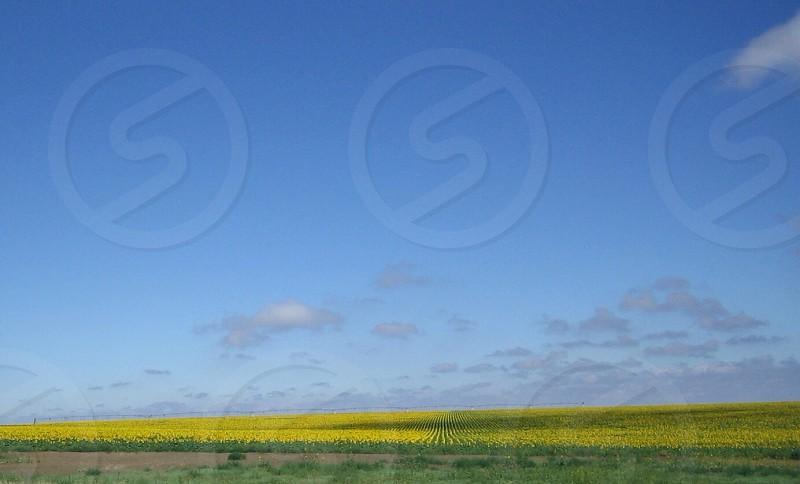 flower field  photo