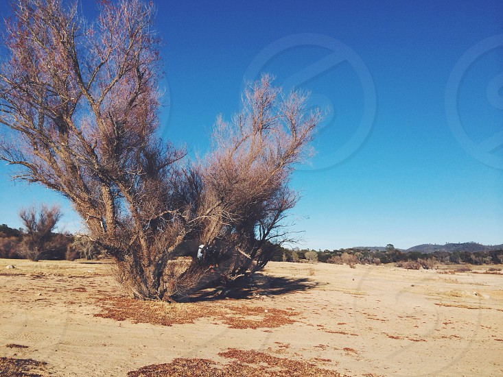 view of a dried tree  photo