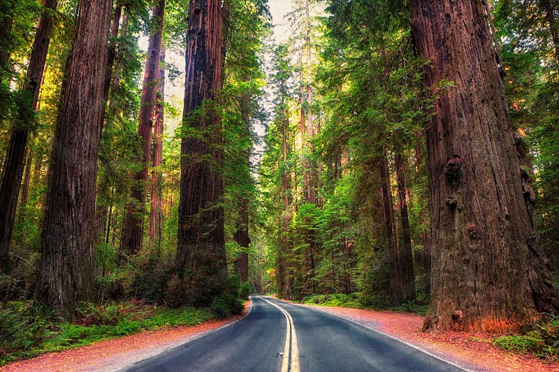 Avenue Of The Giants photo