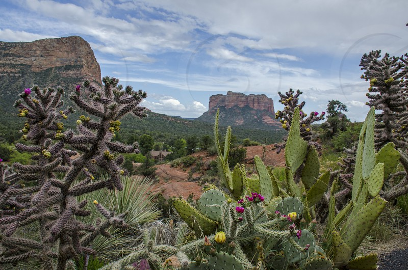 Desert cactus and mountains in Sedona Arizona photo