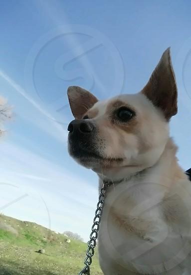 Dog's View photo