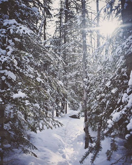 Snow covered forest trail with sun flare photo