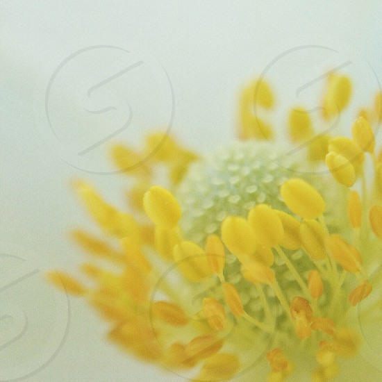 yellow and green flower in macro photography photo