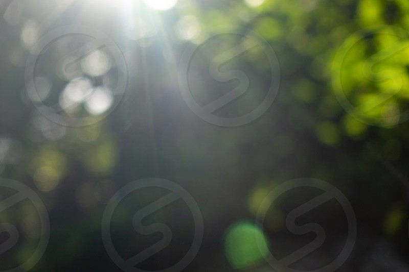 Beautiful natural blurred bokeh background with bright sun rays. Summer green garden. photo