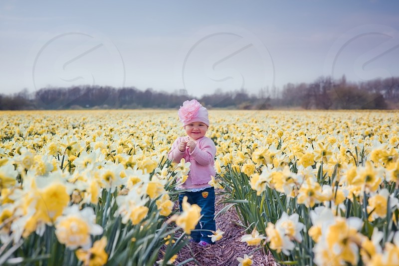 Little girl in a blossom narcissus field  photo